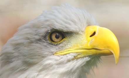 Lakeland Bird of Prey Centre, Penrith
